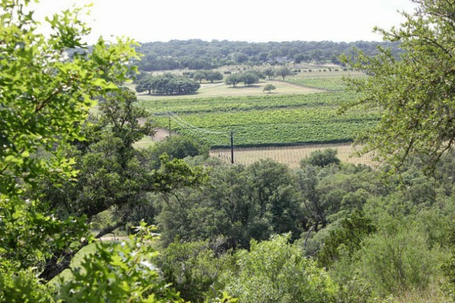 Driftwood Vineyards | Austin, Texas Travel Guide