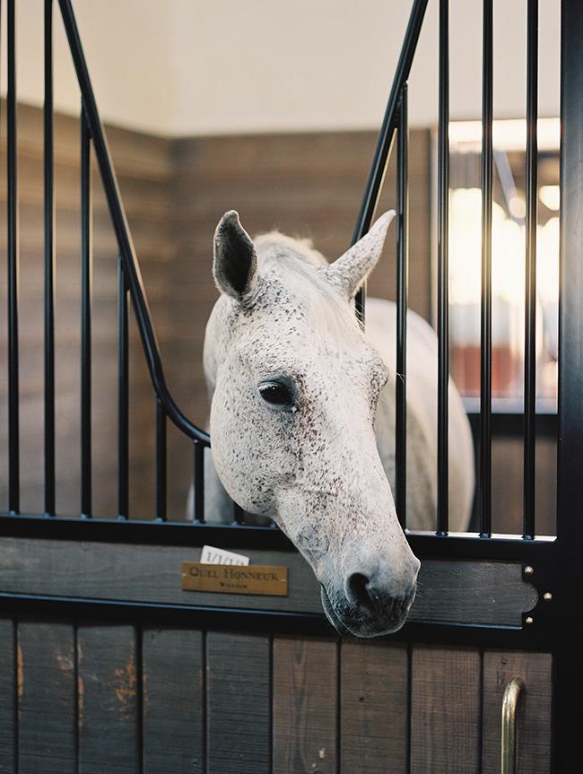 A horse at LuckyJack Farms