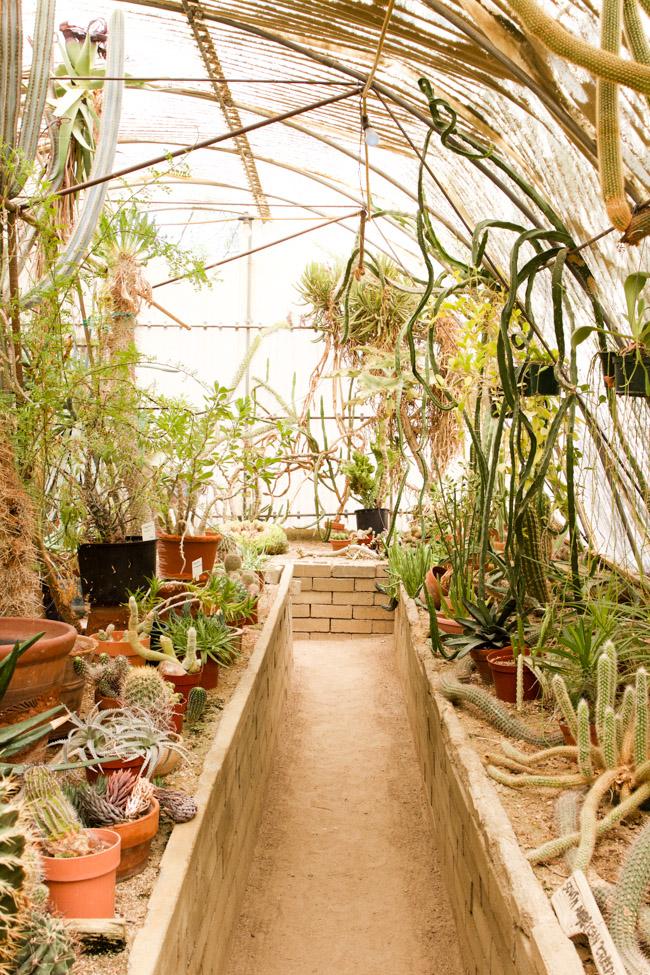 Inside the Moorten Botanical Garden green house