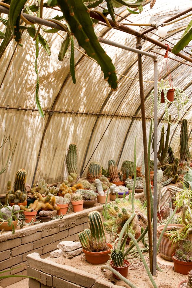 Moorten Botanical Garden inside the green house
