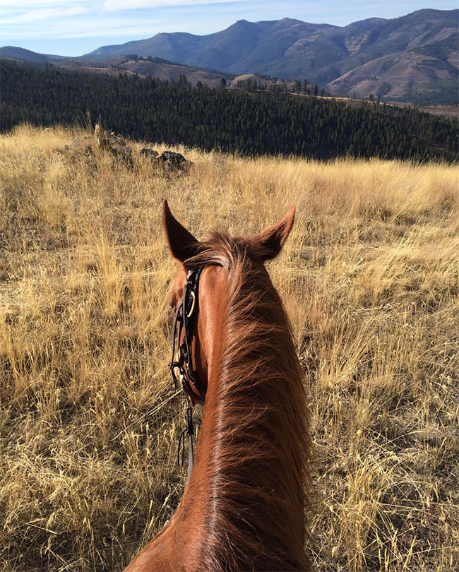 A perfect view from the back of a horse